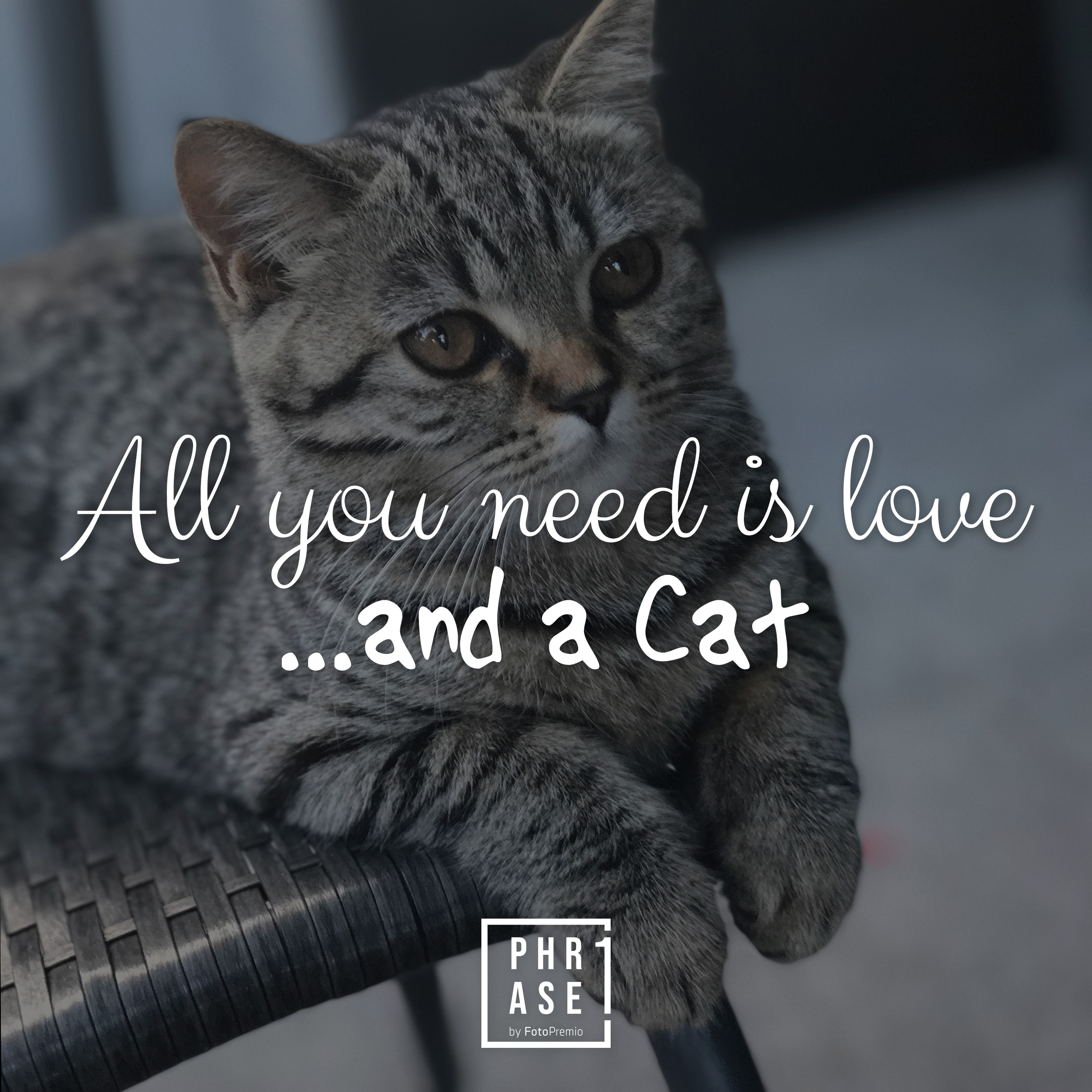 All you need is love …and a cat