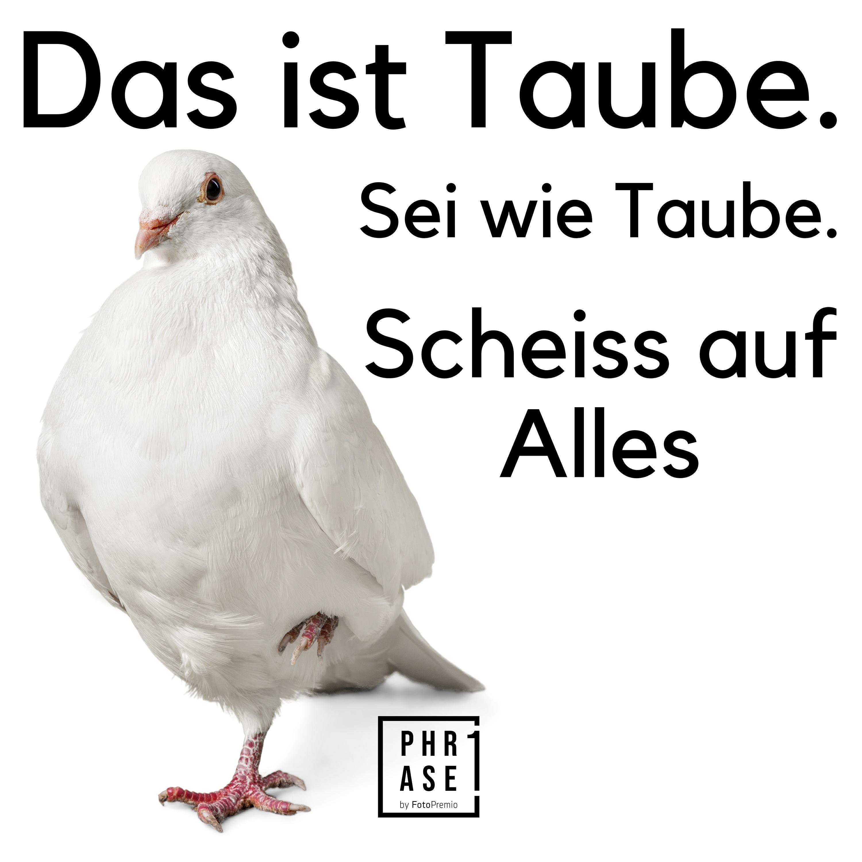 Das ist Taube. Sei wie Taube. Scheiss auf alles.
