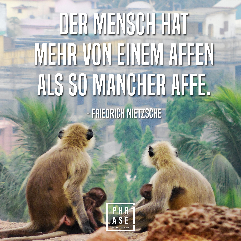 Der Mensch hat mehr von einem Affen als so mancher Affe. - Friedrich Nietzsche